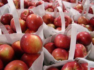 Jablka pro výrobu cidru