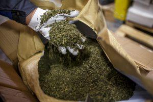 Výroba tatranského čaje