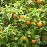 Nechte se unést pomerančovým opojením likéru triple sec