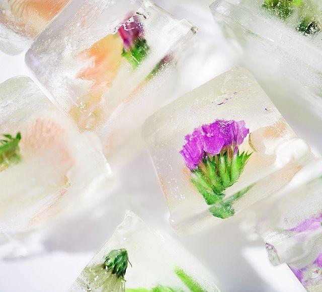 Víte, že do ledu můžete zamrazit nejrůznější ovoce, ale i květiny? Výsledek pak vypadá skvěle a v koktejlech se bude vyjímat.