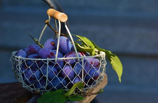 Švestka - nejčastěji používané ovoce na pálení slivovice