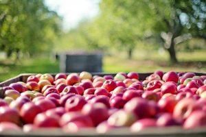 Nejlepší jablkovice / calvados